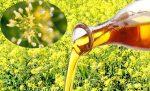 Мелкоплодный рыжик – полезные и лечебные свойства, противопоказания, описание, фото, рыжиковое масло