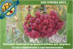 Рябина красная как сушить – сушёные ягоды и плоды, полезные свойства настойки, варенья, листьев и противопоказания для женщин и детей (народные рецепты)
