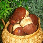 Как сохранить белый гриб – Как хранить белые грибы: способы и сроки