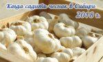 Когда высаживают зимний чеснок в сибири – Когда садить чеснок в Сибири? Опыт сибиряка, 2018