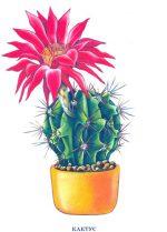 Комнатные растения в классе фото с названиями – Ой!
