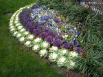 Растения низкорослые для клумбы – Низкорослые многолетние бордюрные цветы для клумбы, которые цветут все лето: название и фото
