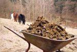 Сухой конский навоз как удобрение как применять отзывы – Конский навоз как удобрение: как применять, отзывы садоводов