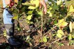 Уход за красной смородиной осенью подготовка к зиме – Уход за смородиной после сбора урожая и осенью