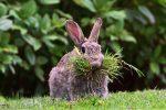 Ядовитые травы для кроликов – фото и названия ядовитых растений