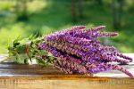 Целебные свойства шалфея – лечебные свойства и противопоказания, применение для женщин и мужчин, рецепты, отзывы
