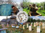 Формирование гнезда после откачки меда – Установки для пчеловода на период окончания медосбора и подготовки пасеки к зиме