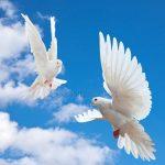 Фото голубого – Аватары и картинки с голубями