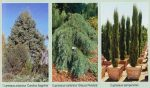 Где растут кипарисы в россии – фото, описание и виды дерева
