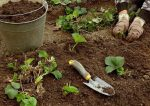 Грунт для клубники своими руками – Почва для клубники состав