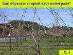 Обрезка старой лозы винограда осенью – Как обрезать старый заросший куст винограда