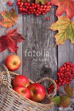 Осень и яблоки фото – Картинки осенние яблоки и листья, Стоковые Фотографии и Роялти-Фри Изображения осенние яблоки и листья