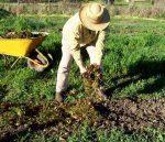 Осеннее удобрение для огорода – Какие удобрения вносить осенью. Комплексные, минеральные и калийные удобрения для почвы :: SYL.ru