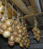 При какой температуре хранят лук – Как сохранить лук на зиму в домашних условиях в квартире или в подвале. Правила и маленькие хитрости хранения репчатого лука