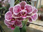 Почему не цветет орхидея – Почему не цветёт орхидея? — Растения и садоводство