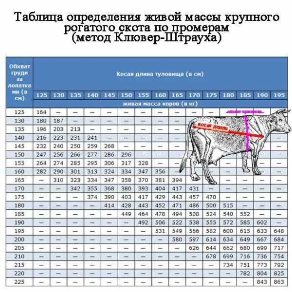 таблица измерения веса крупного рогатого скота молодняка