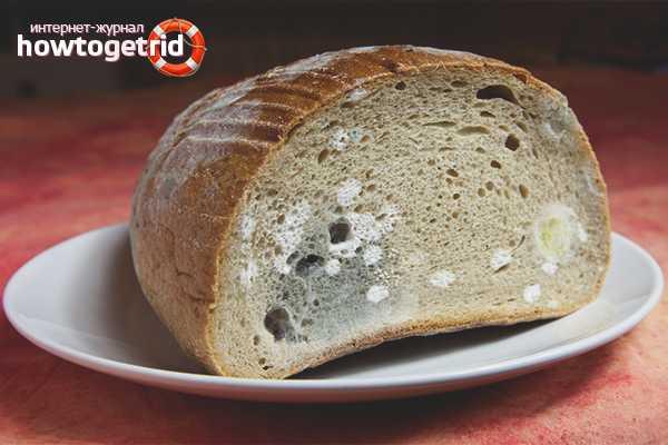 плесневый гриб на хлебе