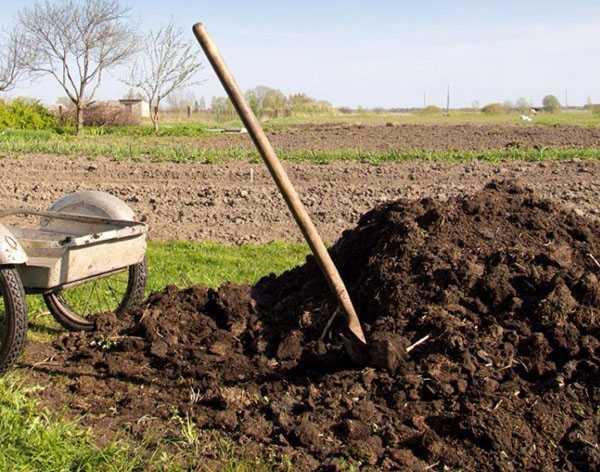 коровий навоз как удобрение как применять осенью