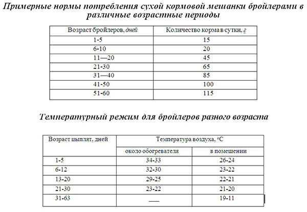 какая температура должна быть у бройлеров